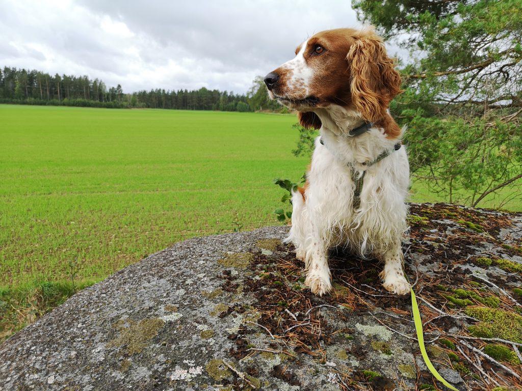 Sookie på en sten